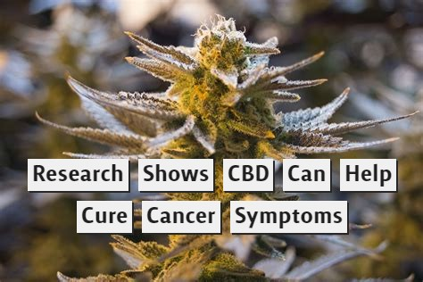 Research Shows CBD Can Help Cure Cancer Symptoms