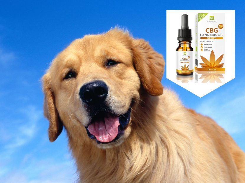 How to choose CBD for Pets